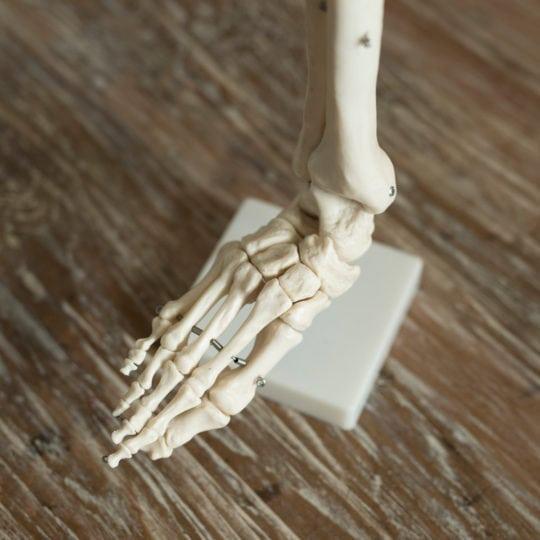 Modélisation d'un pied